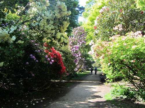 Sheringham Park awash with colour any time of year