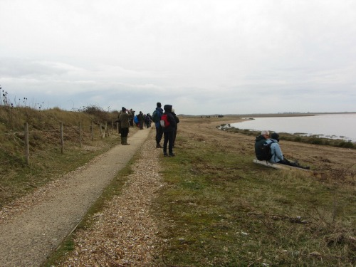 Enjoying the Snettisham Wader Spectacular