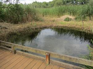 Strumpshaw Fen dipping pond for children