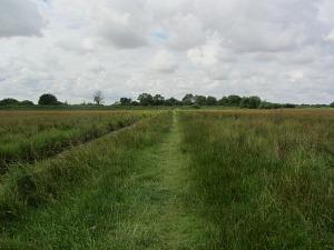 Meadow Trail at Strumpshaw Fen