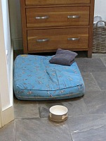 Dog beds, towels and bowls provided!