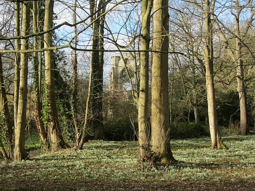 Walsingham Priory through the snowdrops