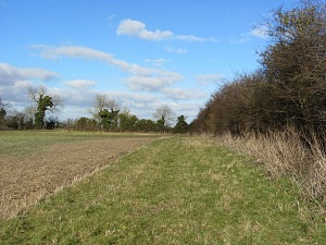 Open countryside on the Walsingham circular walk