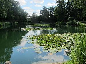 Monet's Garden in Watton Norfolk