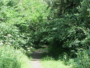Entrance to Wayland Wood, Watton, Norfolk