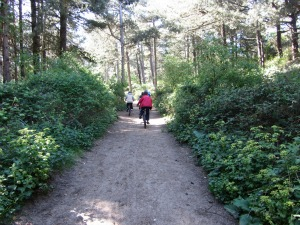Holkham Pine Forests