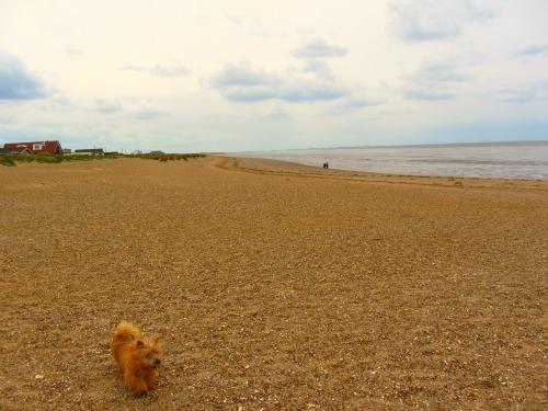Dog friendly Heacham Beach