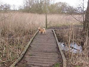 Dogs on the Peddars Way