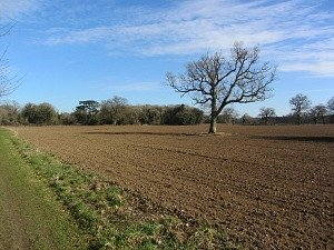 Open countryside along the Peddars Way
