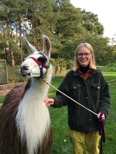 Gwinny the llama