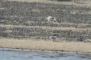 Wildlife on Blakeney Point