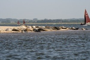Blakeney Point seals