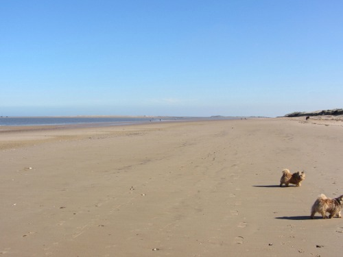 Norfolk's amazing beaches, perfect for dogs!