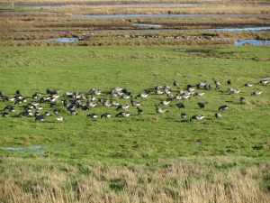 Cley Marshes Brent Geese