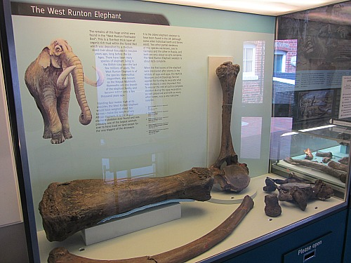 A few bones from the West Runton Elephant