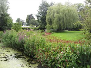 Weeping willows and an abundance of flowers at Gooderstone Water Gardens
