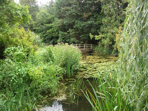 More of Gooderstone Water Gardens
