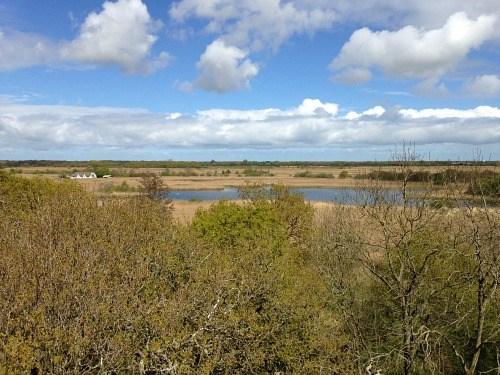 The view of Hickling Broad from the watch tower