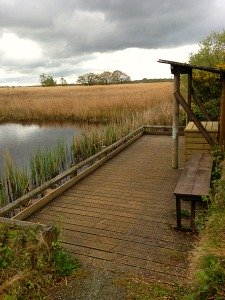 Pond dipping at Hickling Broad