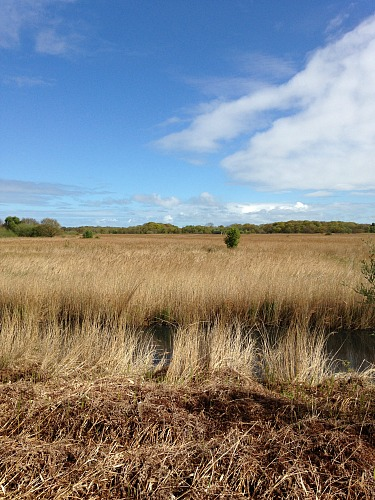 The huge expanse of reed beds on the NWT Hickling Broad