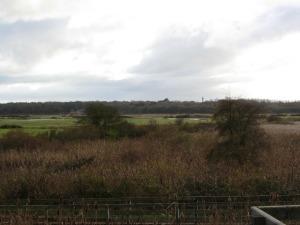 Grazing marshland at Holkham