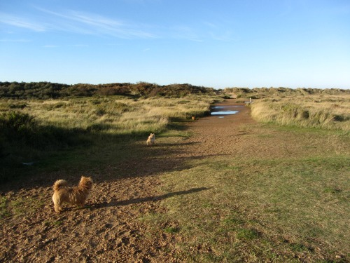 Holme Dunes on the edge of  the golf course