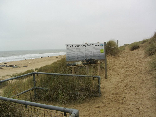 The seal viewing platform at Horsey beach