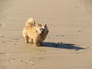 Tangle on Brancaster Beach