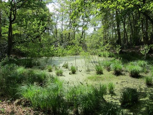 The Ice Age Pingo Ponds on Thompson Common