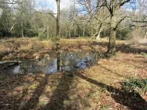 A pingo pond