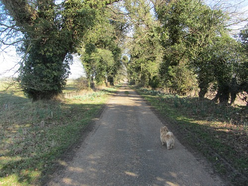The open tracks on the Peddars Way