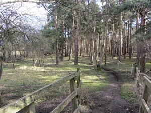 Woodland on the Peddars Way near Thetford