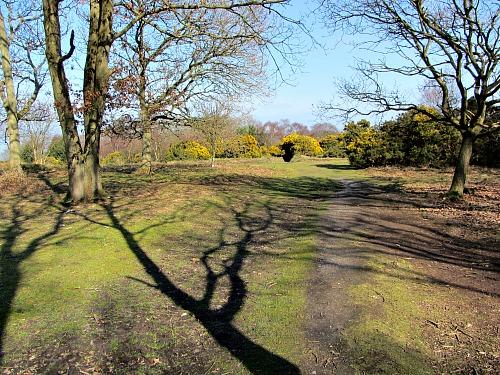 The heath at the Roman Camp
