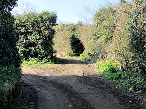 The narrow path you walk along at Manor Farm