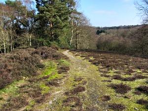 Heading down through the woods to East Runton