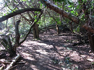 A fairly steep but pretty wood taking you up to the Roman Camp