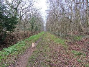 Lovely wide track on the Roydon Common circular walk