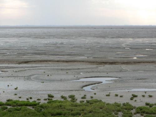 RSPB Snettisham mud flats
