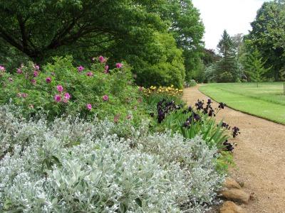 Herbaceous border at Sandringham