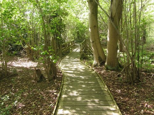 The boardwalks at Sculthorpe Moor