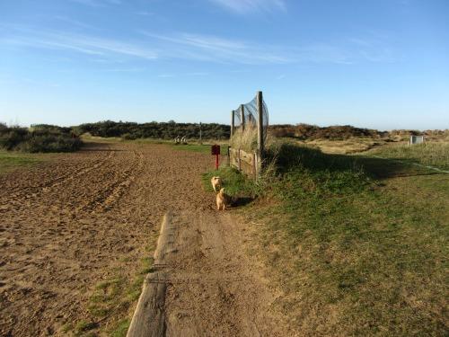 path to Holme beach