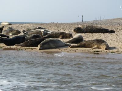 Seal trips in Norfolk