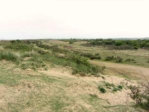 The Coastal Park from the sea wall