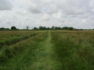 Meadow Trail at Strumpshaw Fen