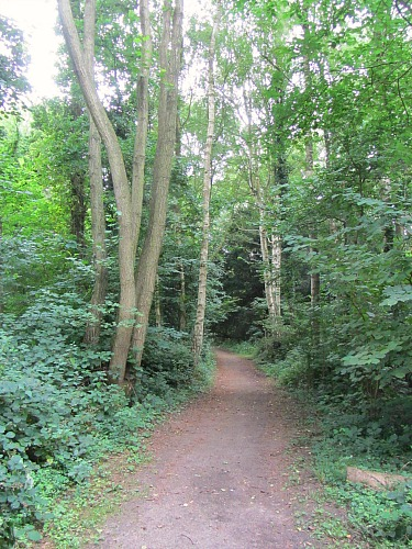 Part of the woodland trail at Strumpshaw Fen
