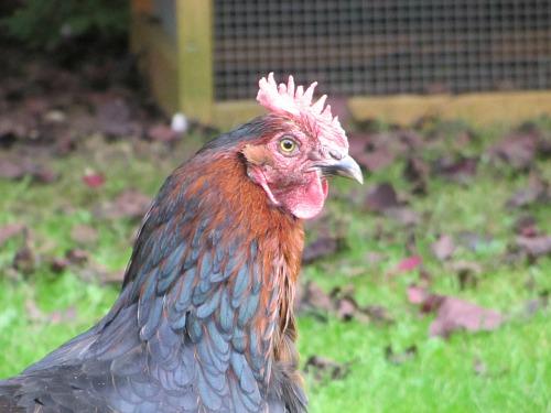 Swaffham Poultry Market