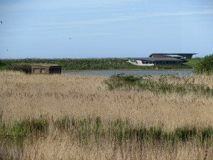 Titchwell Marsh RSPB reserve