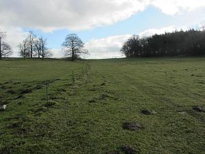 Open fields on the Walsingham circular walk