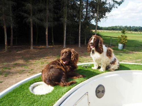 Dog friendly Woodland Boat